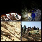 غارها نقش اساسی در حفظ تنوع زیستی دارند
