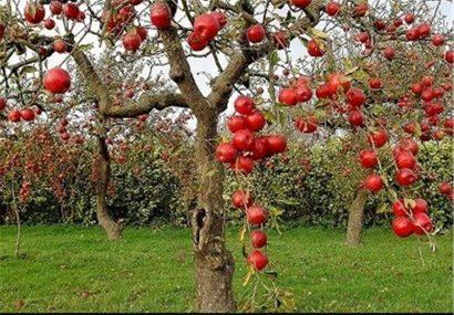 ثبت باغ سیب کرج در فهرست آثار تاریخی سبب جلوگیری از تغییر کاربری آن میشود