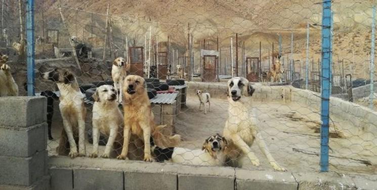 فردیس ظرفیت عقیم کردن ۴۰ سگ در هفته را دارد