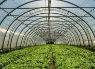شهرک گلخانه ای در فردیس راه اندازی می شود