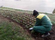 آمادگی منطقه ۷ برای استقبال از فصل سرما / کاشت ۸۴۵ گلدان فصلی