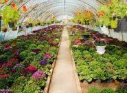 شهردار : کرج دومین تولیدکننده گیاهان گلخانهای کشور است